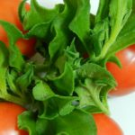 アイスプラントの食べ方サラダの他にどんな食べ方がある!?